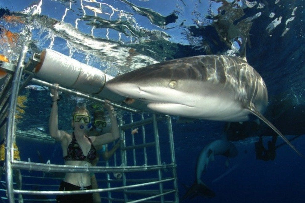 Hawaii Shark Encounters Honolulu Attractions Review 10best