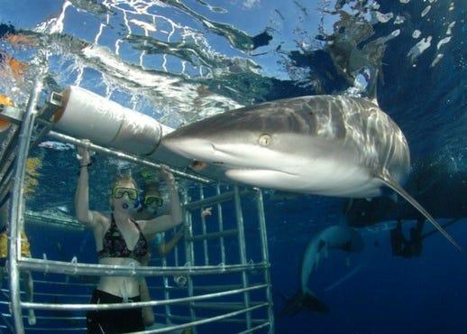 Hawaii Shark Encounters: Honolulu Attractions Review
