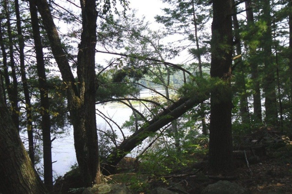 沃尔夫的颈部森林州立公园
