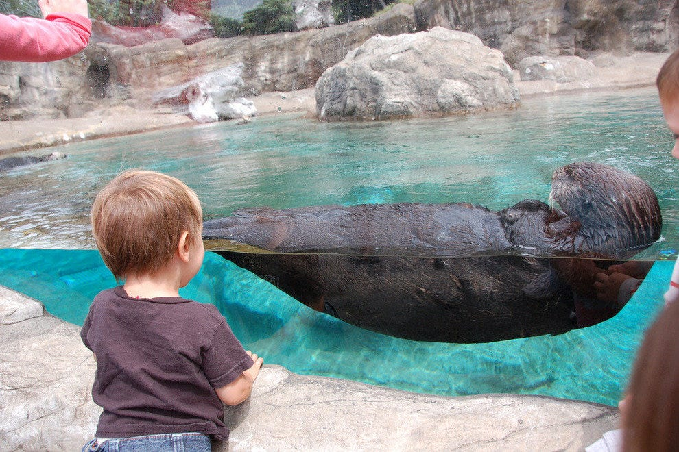 Tiny tot with sea otter at Oregon Coast Aquarium