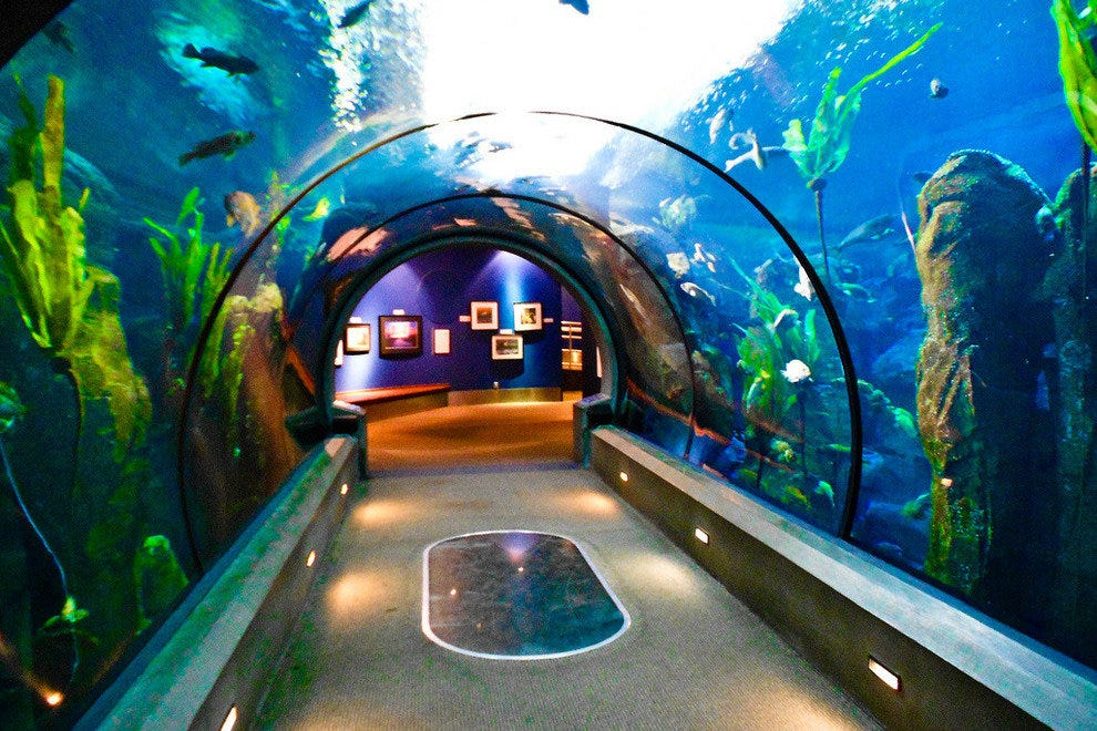 Passages of the Deep at Oregon Coast Aquarium