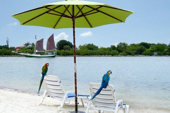 Best Attractions & Activities in Miami