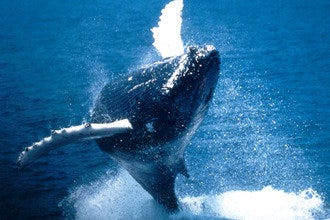 Boston Harbor Cruises - Whale Watching