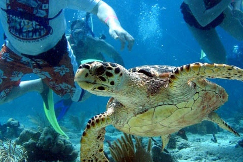U.S. Virgin Islands Scuba Diving and Snorkeling: 10Best U ...