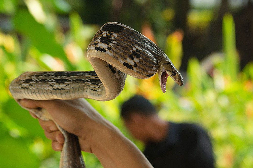 Queen Saovabha Institute Snake Farm