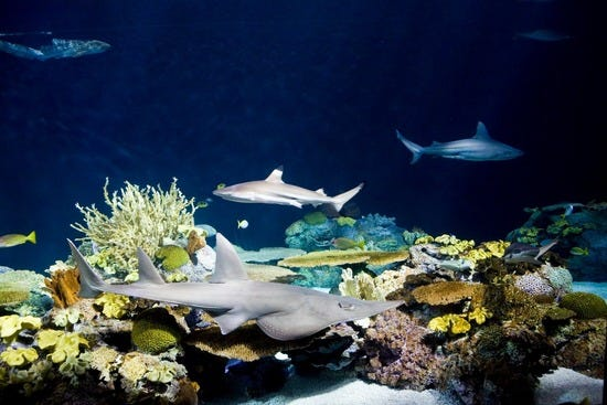 John G. Shedd Aquarium: Chicago Attractions Review - 10Best Experts ...