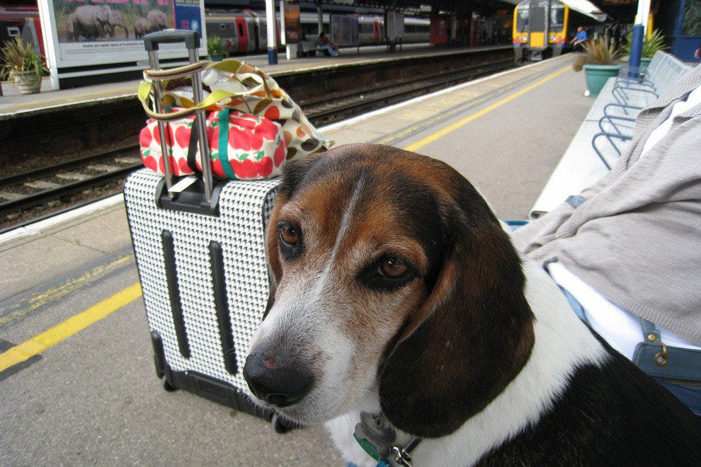 A patient pup sits at a Southampton, UK train station