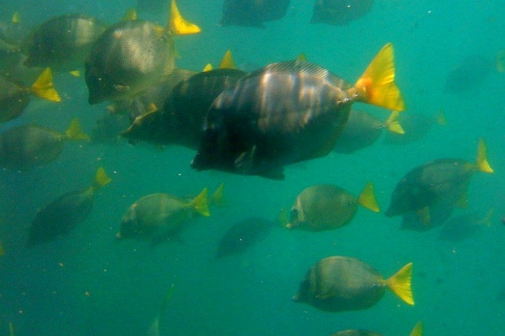 Underwater views of the local marine life from Cabo Submarine.