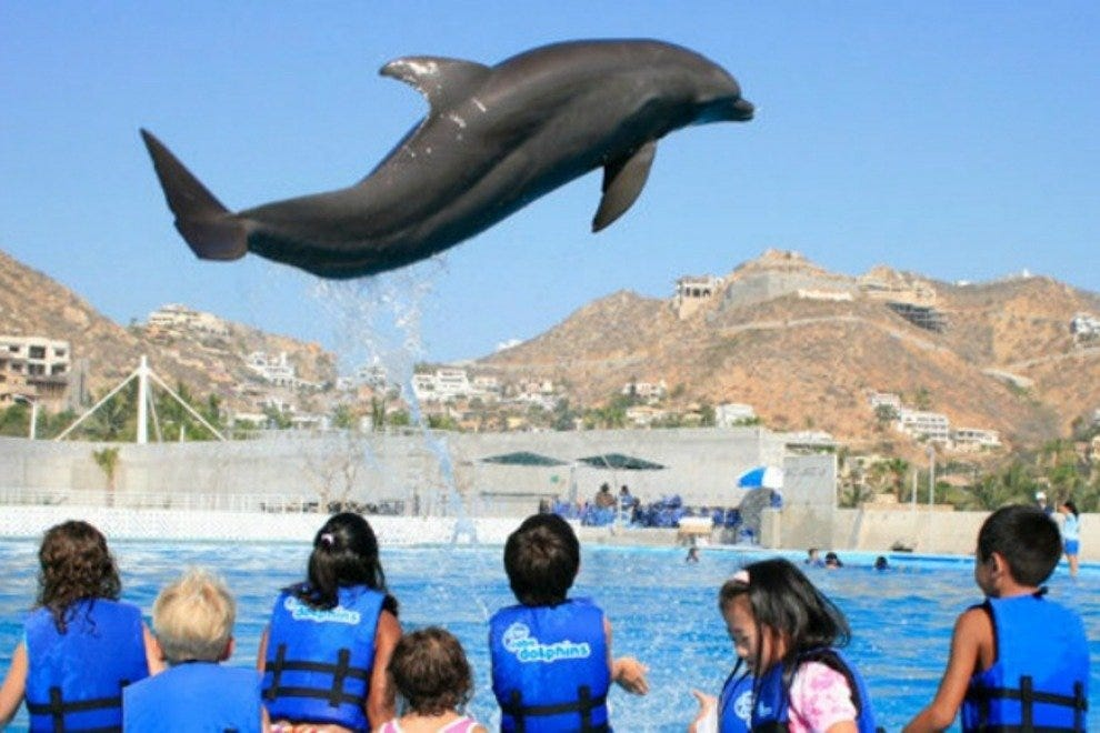 Dolphin showing off his tricks for a group of children.