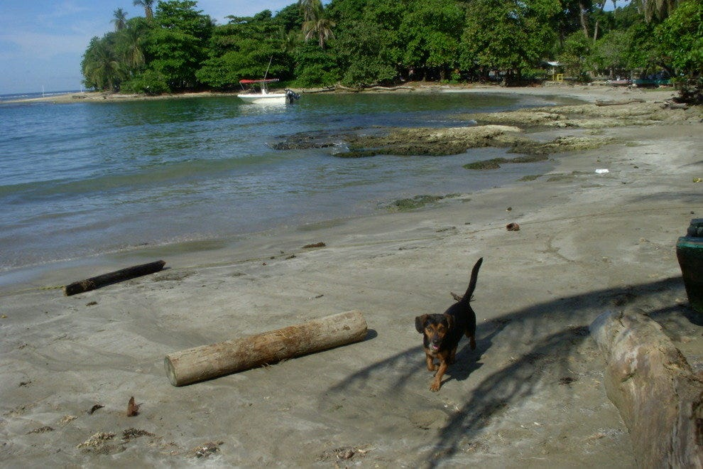 Things To Do In Puerto Viejo De Limon Costa Rica Travel Guide By 10best