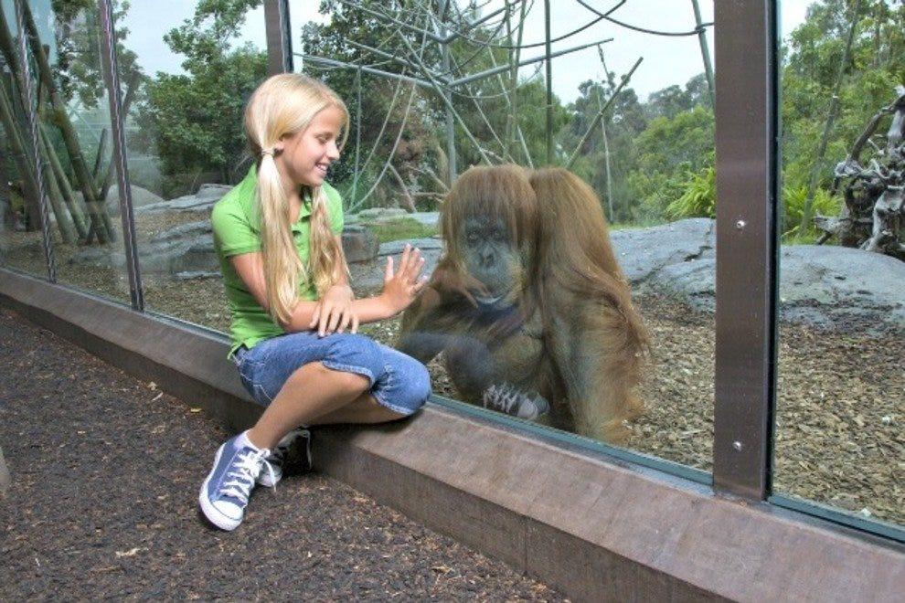 Girl With Gorilla at the San Diego Zoo