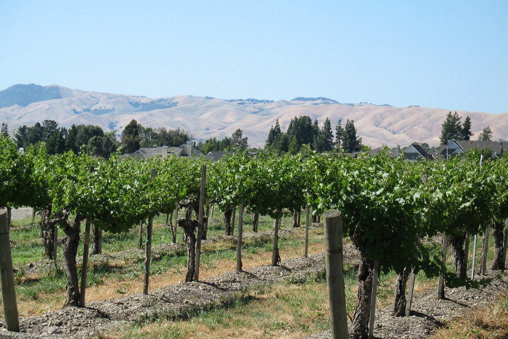 The bountiful hills of Livermore Valley are bursting with grapes