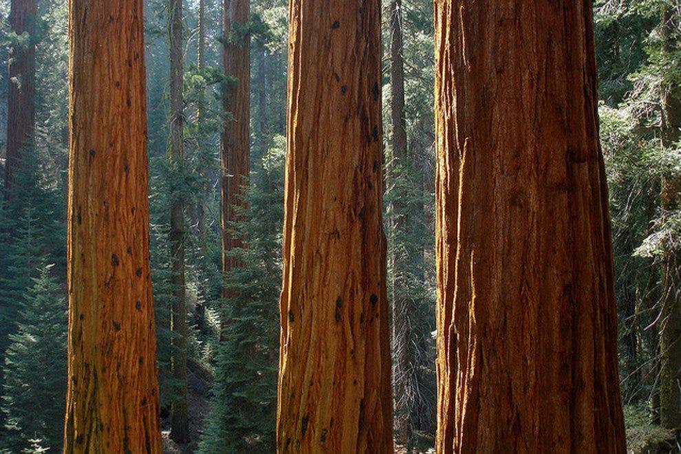 Marvel at the Giants of Sequoia National Park