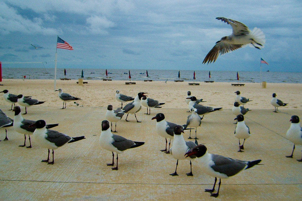 Seagulls on the Gulfport Beach