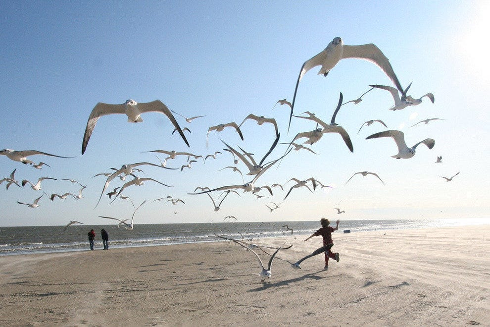 Seagulls fly along Galveston's gulf coast