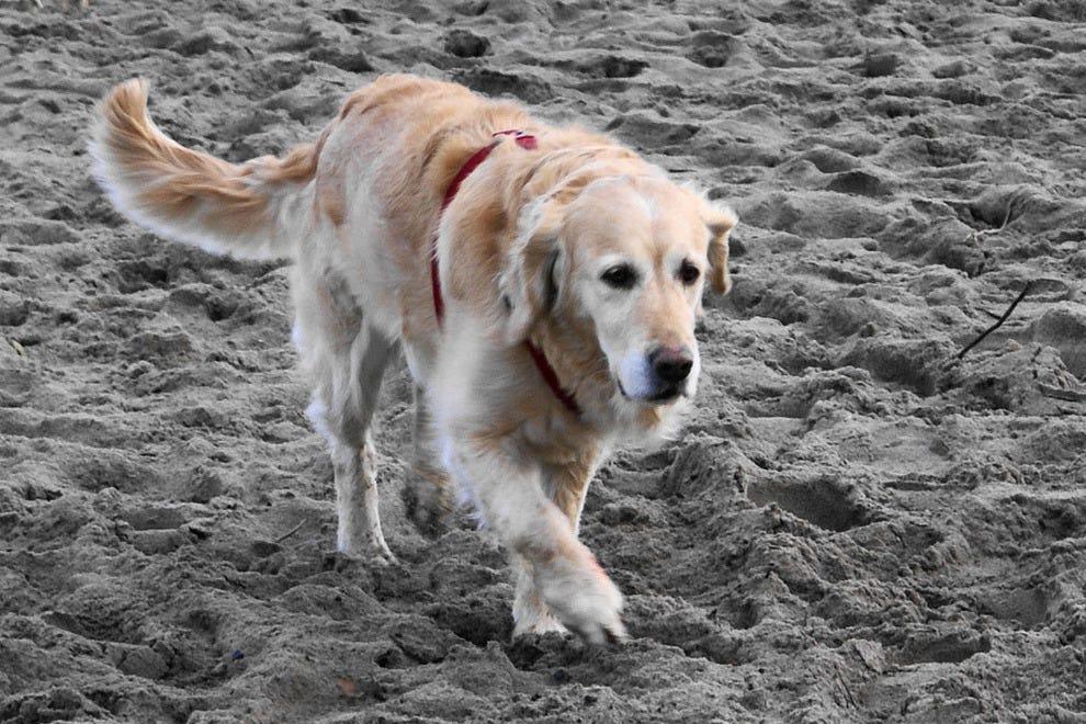 Is Carolina Beach Dog Friendly