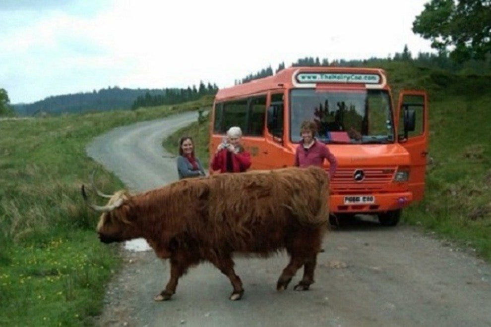 The Hairy Coo - Free Scottish Highlands Tour