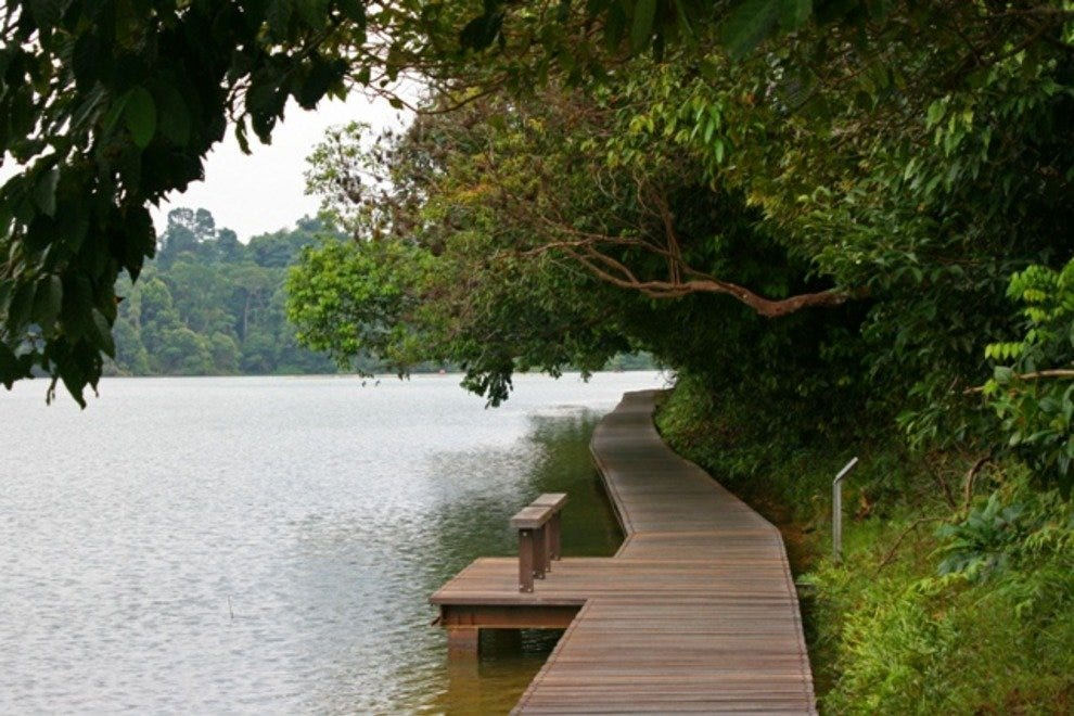 The MacRitchie Reservoir Park offers several boardwalk treks around the reservoir