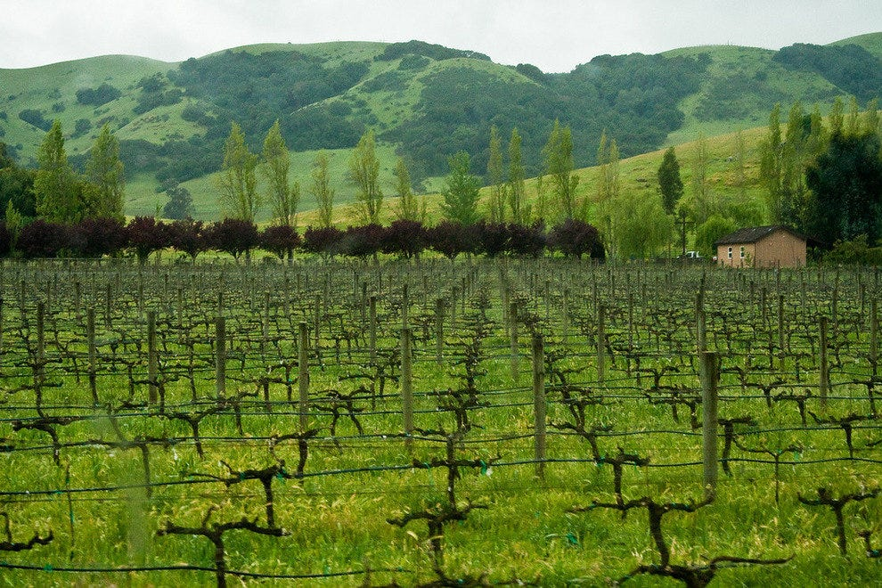 Cline Vineyards in Sonoma, California