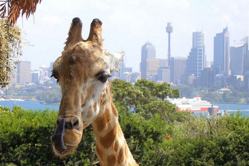 Sydney skyline from the Sydney Zoo