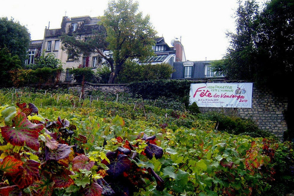 Vineyard in Montmartre