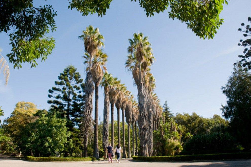 Jardim Botanico热带
