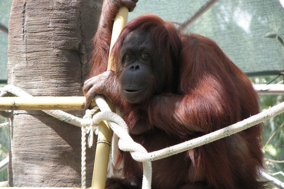 an analysis of the animals in the captivity of the united states zoos Detailed discussion of the laws affecting zoos taken in the united states or on in most states for zoos to sell their surplus animals to canned.