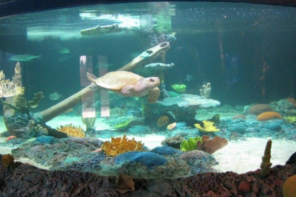 Get up close and personal with exotic underwater sea creatures at the Wildlife World Zoo's newest aquarium