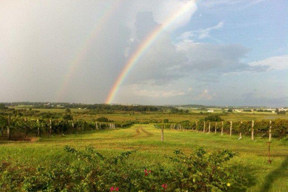 Lakeridge offers a rainbow of varietals in a verdant setting.