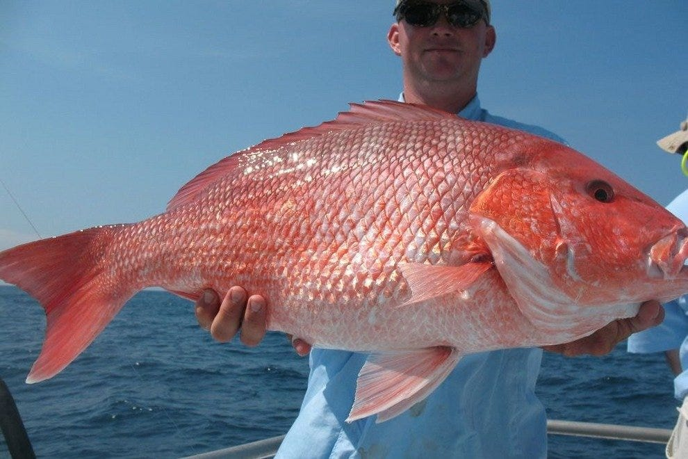Savannah fishing charters 10best attractions reviews for Best deep sea fishing