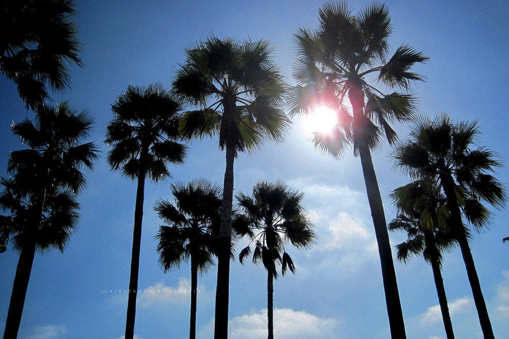 Sunshine through the palms, just another day in Santa Barbara.