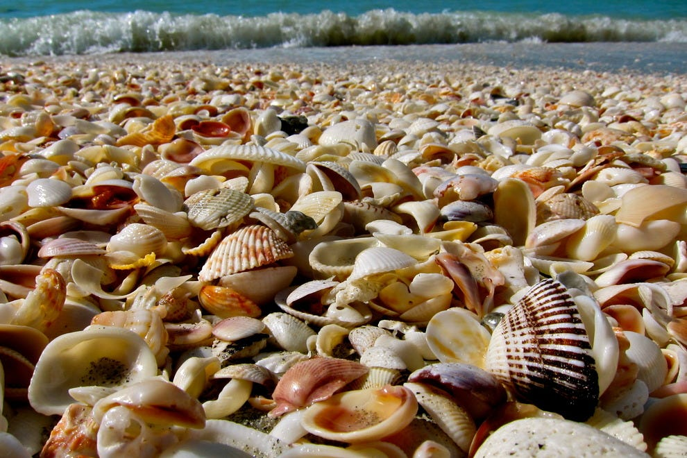 Sanibel Island Shells: Sanibel Island Beaches: Fort Myers Attractions Review