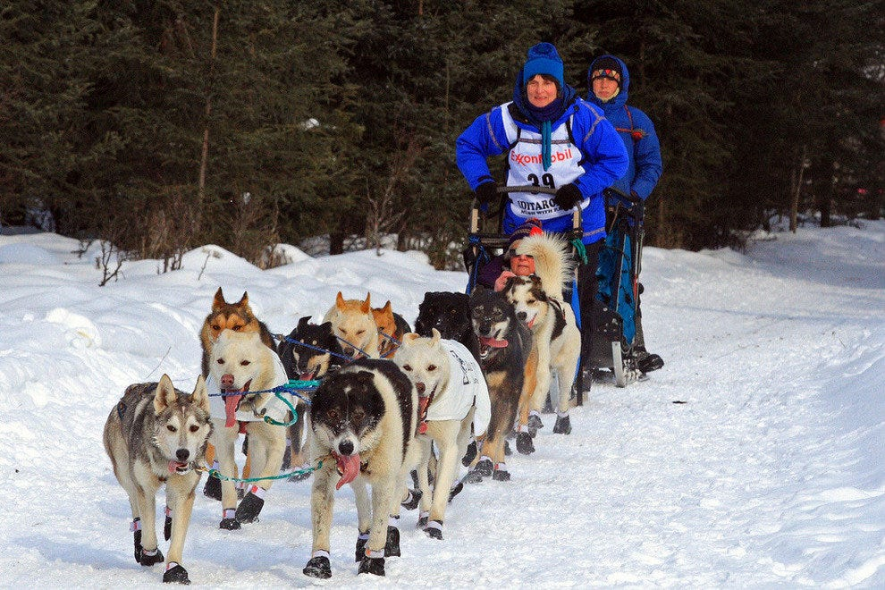 An Iditarod dog sled team