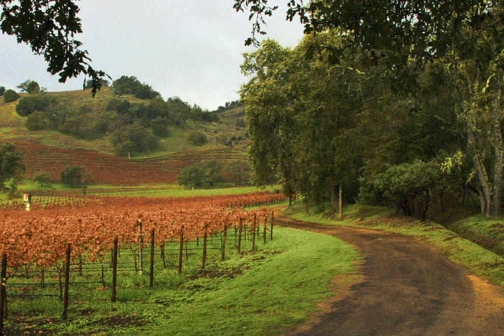 A vineyard road