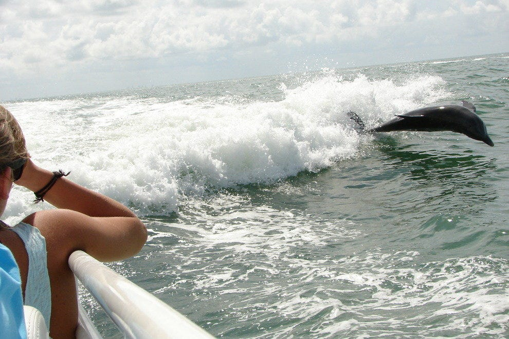 Dolphins are easily seen from boats and beaches