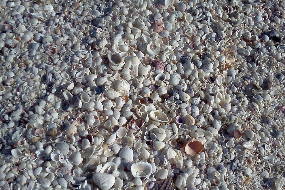 Sanibel's beaches are strewn with seashells
