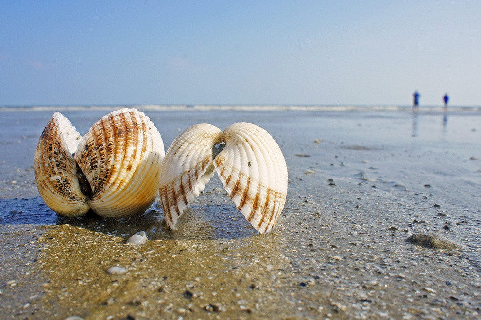 Kiawah beach shells