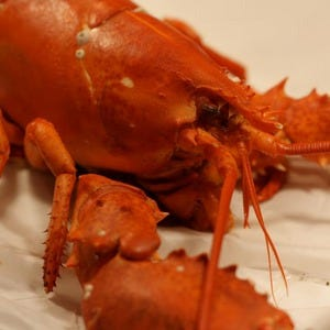 The Lobster Trap Reviews Asheville North Carolina | Lobster House