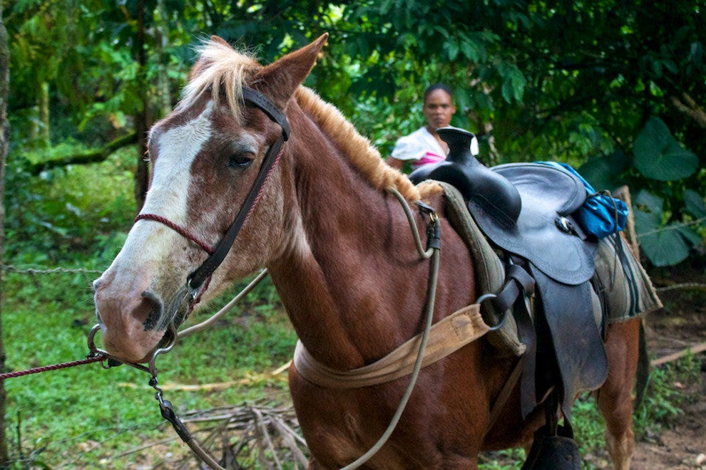 Horses can carry you over the uneven uphill terrain to El Limon.