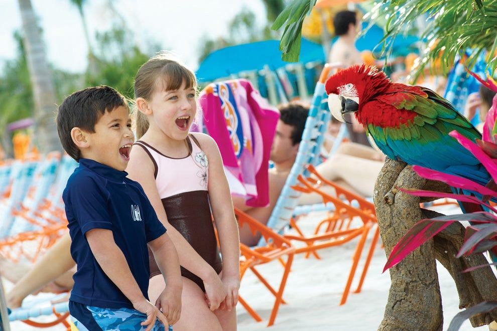 Macaw encounter
