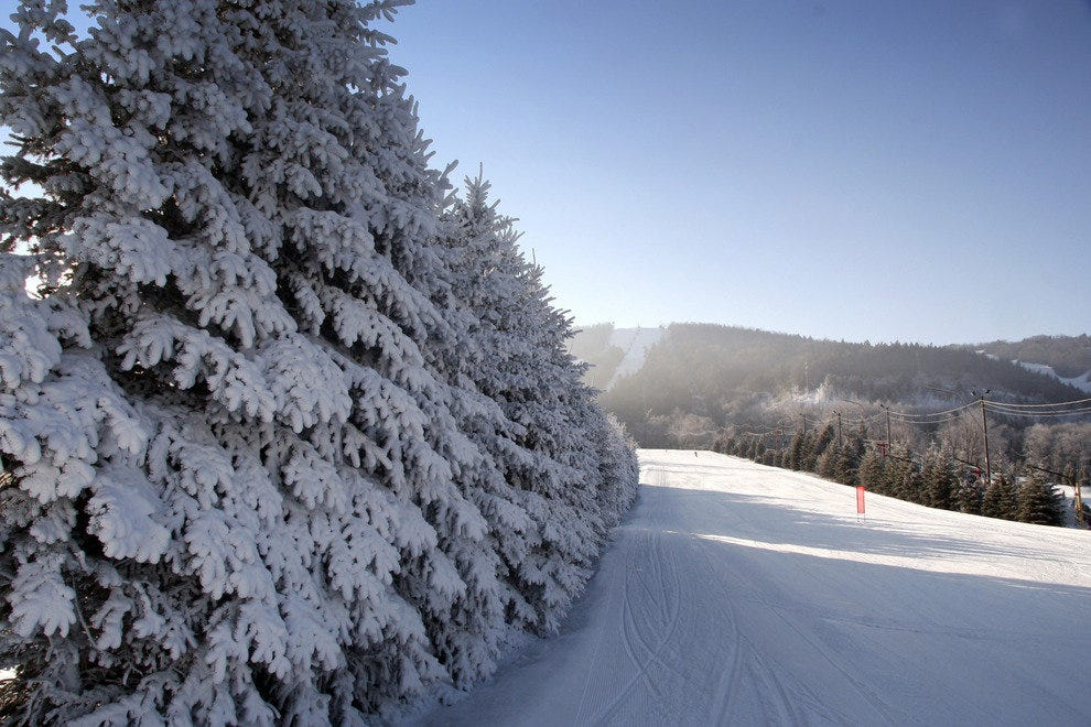 Frosted Pine Trees at Blue Mountain