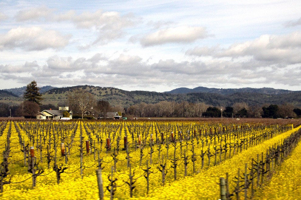 Winter Scene on Sonoma Valley Vineyards