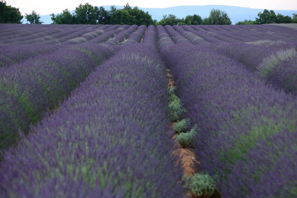 Lavender Route in Provence, France