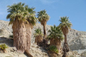 10Best Itinerary:  Tour San Andreas Fault in Palm Springs