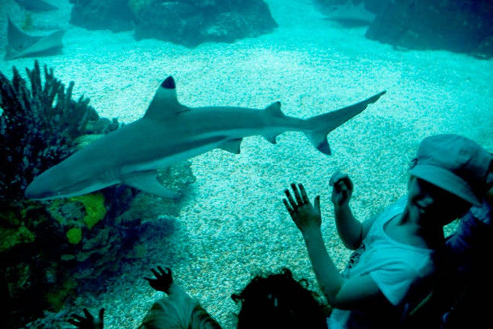 Youngsters share a close encounter with a shark at the Oceanario de Lisboa