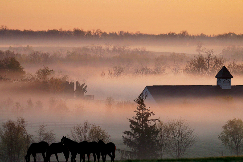 Misty morning in Bluegrass Country