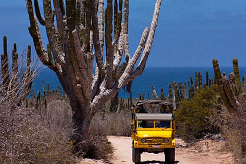 Cabo Adventures' Outback Camel Safari provides an introduction to the flora and fauna of Baja California Sur