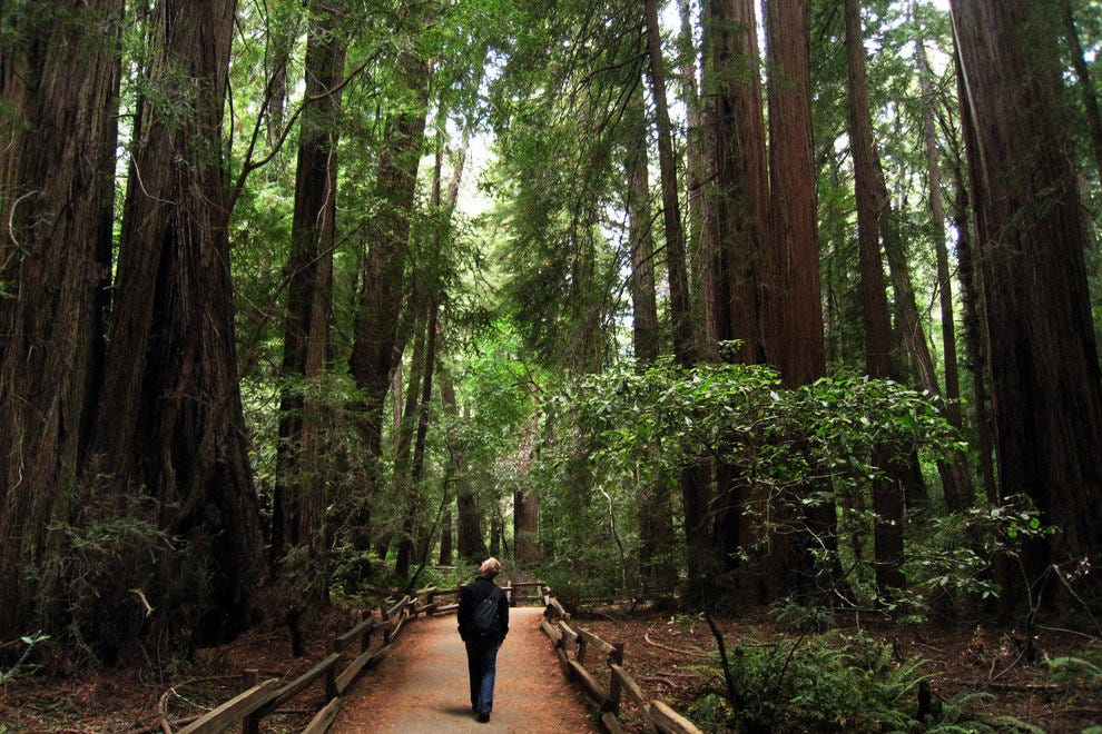 A Visitor Marvels at the Grandeur of the Muir Woods National Monument