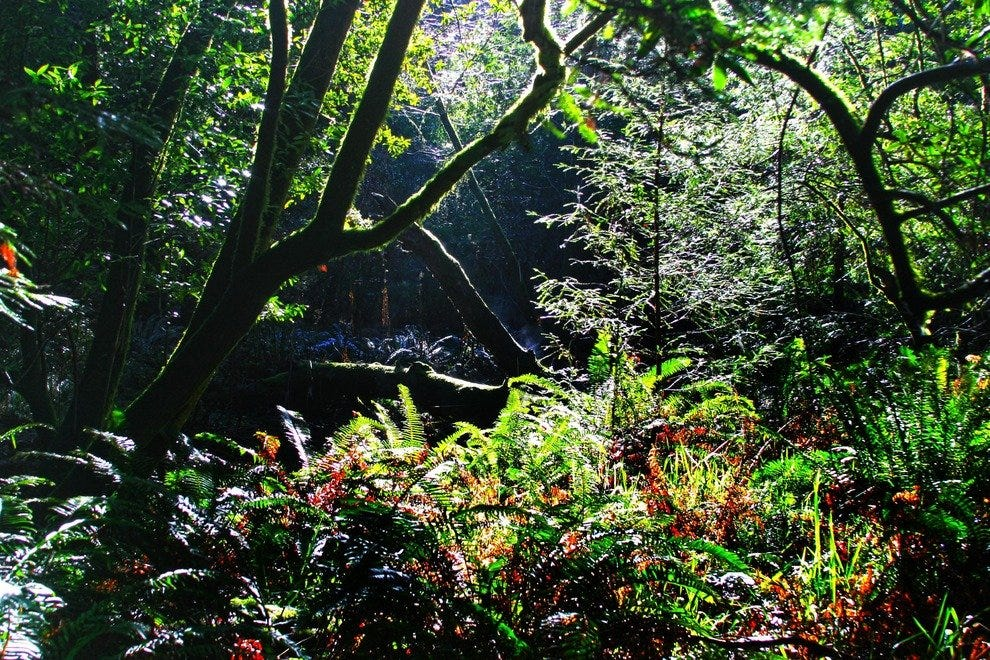 A Beautiful World of Ferns and Foliage Thrive Underneath the Giant Redwoods