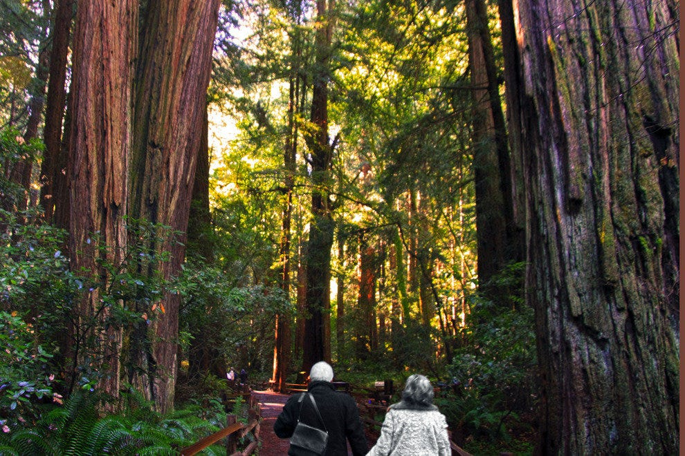 An Elderly Couple Find Inspiration in the Ancient Redwoods